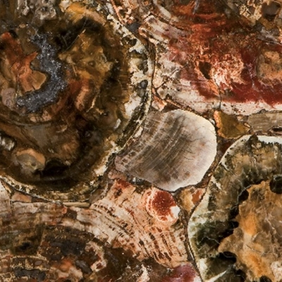 Caesarstone Concetto 8330 Petrified Wood