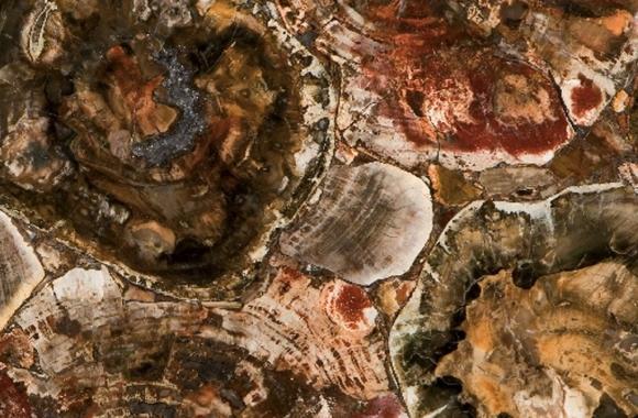 Caesarstone Concetto 8330 Petrified Wood